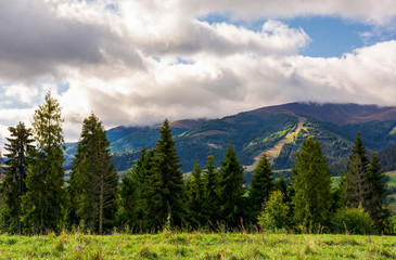 spruce forest at the foot of the mountain on a cloudy day. blue sky with clouds in summer landscape
