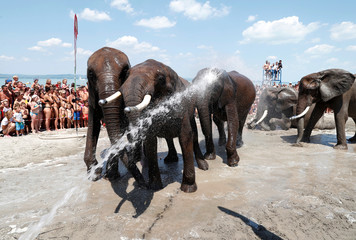 Elephants of the Hungarian National Circus are sprayed with water to cool down on the shore of the Lake Balaton before the Night of the Circuses in Balatonlelle