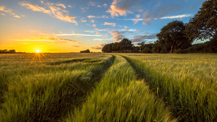 Aluminium Prints Village Tractor Track through Wheat field at sunset