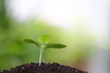 Green plant sprout