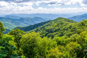 Sun shines on the Green Forest of the Great Smokey Mountains National Park in North Carolina