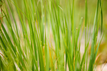 High key, close up image of grass