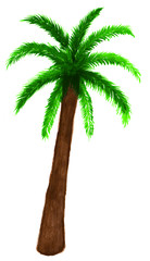 Palm tree in watercolor on white background.