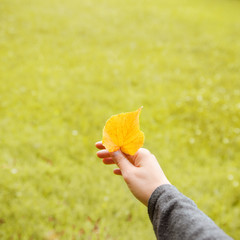 Yellow leaf in female hand. Green grass background.