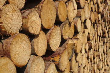 Woodpile in warm sunlight