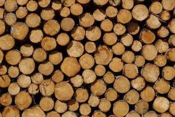 Woodpile in the warm sunlight