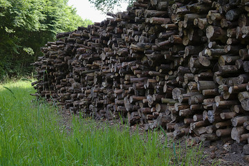 Pile of wood in the forest surrounded by green grass
