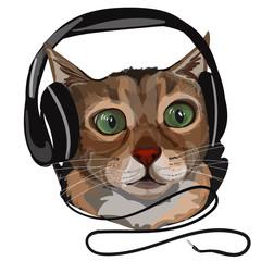 Vector illustration of surprised domestic cat in headphones.