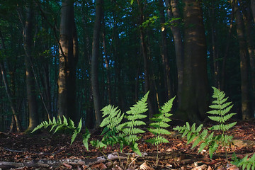 Strong green fern in the dark forest