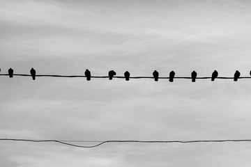 Photo of a close-up of many silhouettes of birds