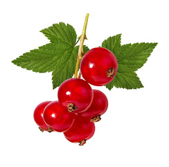 Fototapete - red currant isolated on white background