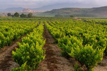 Vineyard, San Vicente de la Sonsierra as background, La Rioja, Spain