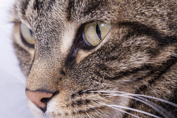 Close-up of a striped cat's face with green eyes.