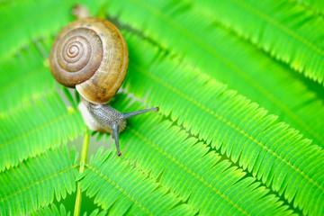 Closeup snail on a green leaf