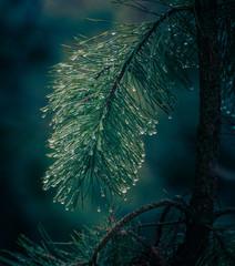 Frosen nature