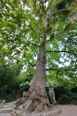 A tall, powerful tree with a green crown supports the rocks of a stone staircase in the park