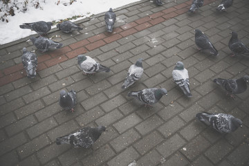 Pigeons on the pavement filtered