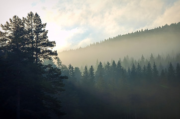 Morning mist in a mountain coniferous forest before dawn. The rays of the sun make their way through the fir trees. travel through the mountains of Montenegro