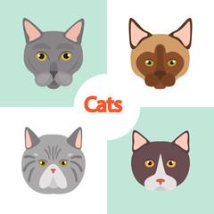 Different cats breeds muzzles color vector icons set. Flat design