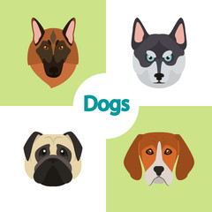Different dogs breeds muzzles color vector icons set. Flat design