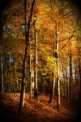 Autumn Morning  - Part 3