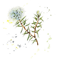 Collection herb. Water color hand drawn illustration. Botanical illustration