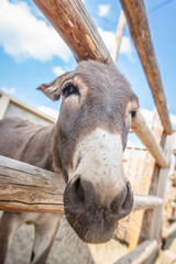 Portrait of a funny looking cute donkey