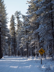 Deer crossing sign in snow