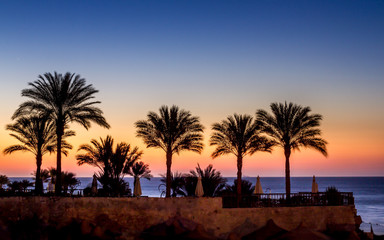 The silhoulette of palm trees in front of a sun rise with pink golden colors bordered by the blue of the sky and the sea