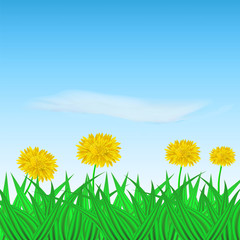 Vector image of realistic flower dandelion in the grass on the background of the sky. Greeting card with a summer day