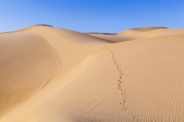 sand dune in sunrise in the sonoran desert with human footsteps in the sand