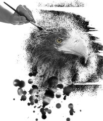 Steller's sea eagle paint on tablet