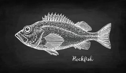 Chalk sketch of rockfish.