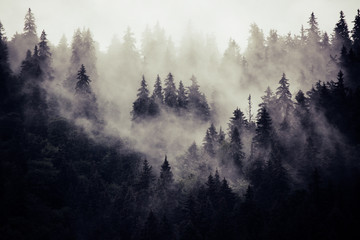 Photo sur Plexiglas Noir Misty landscape with fir forest in hipster vintage retro style