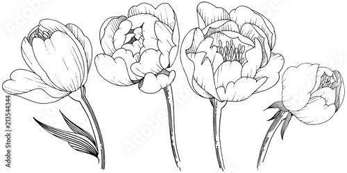 Wildflower Peony In A Vector Style Isolated Full Name Of The Plant