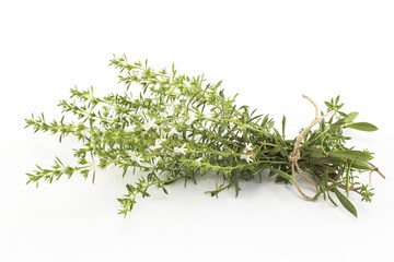 Summer Savory , Satureja Hortensis, Isolated on White