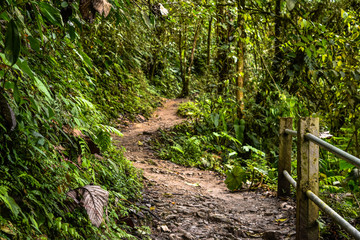 Dirt road inside a forest. Photograph taken in Mindo, Ecuador.