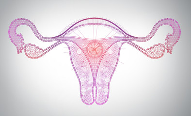 high tech line art of female reproductive system, time, monthly cycle