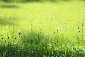 sunlit grass summer background