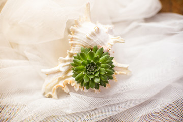 Tiny succulent in a seashell