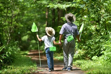夏・緑の森を歩く