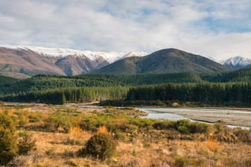 pine tree forest at Wairau river in winter, South Island, New Zealand