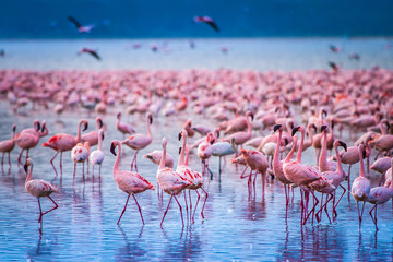 In de dag Flamingo Africa. Kenya. Lake Nakuru. Flamingo. Flock of flamingos. The nature of Kenya. Birds of Africa.