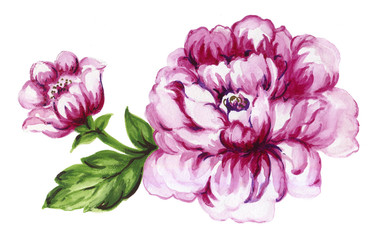 watercolor gouache elegant vintage purple or violet peonies flower