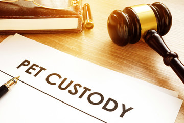 Pet Custody. Documents on a court table.