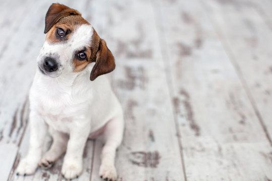Puppy sitting on floor