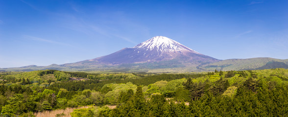 Fresh green forest and beautiful view Mt.Fuji with snow, blue sky in summer at Yamanashi, Japan. Panorama landscape and landmark or symbol of Japan
