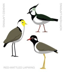 Bird Lapwing Set Cartoon Vector Illustration