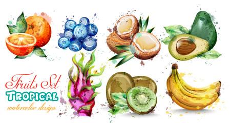 Watercolor fruits set collection Vector. Kiwi, banana, blueberry Tropic summer fruit composition
