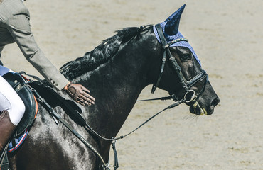 Beautiful girl on black horse in jumping show, equestrian sports. Horswoman in uniform  patting the horse in gratitude. Hot, shiny day.